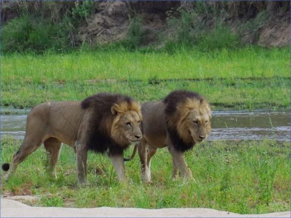 safaris in the u s a 3 Safaris in the U.S.A