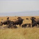 safaris in the u s a 4 150x150 Safaris in the U.S.A
