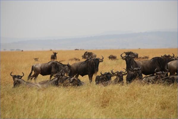safaris in the u s a 4 Safaris in the U.S.A