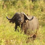 safaris in the u s a 6 150x150 Safaris in the U.S.A