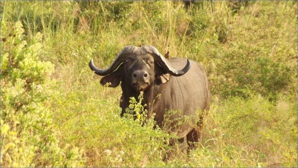 safaris in the u s a 6 Safaris in the U.S.A