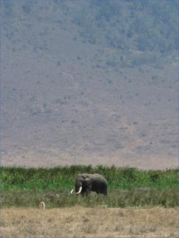 safaris in the u s a 8 Safaris in the U.S.A
