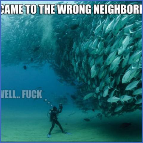 underwater neighborhood 10 Underwater Neighborhood