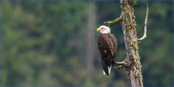 wildlife watching destinations in usa 2 Wildlife Watching Destinations in USA