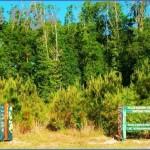 louisiana wetlands keeping it local in covington 5 150x150 Louisiana Wetlands Keeping it Local in Covington