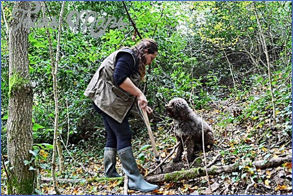 truffle hunting and wine experience from florence 1 Truffle Hunting and Wine Experience from Florence