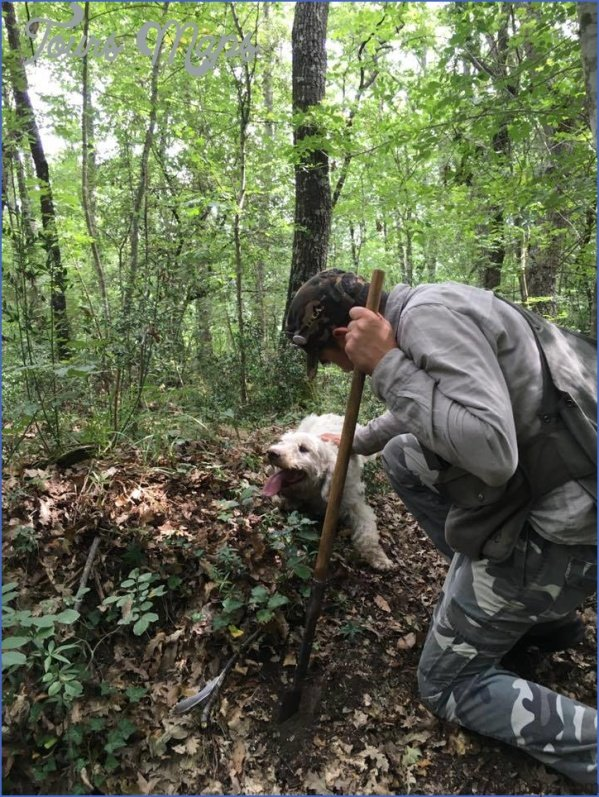 truffle hunting and wine experience from florence 10 Truffle Hunting and Wine Experience from Florence