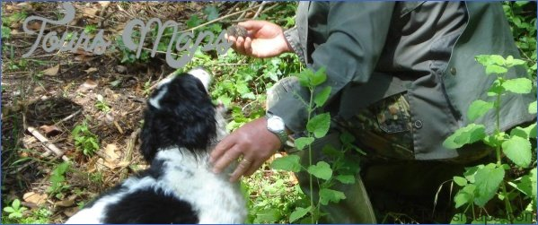 truffle hunting and wine experience from florence 3 Truffle Hunting and Wine Experience from Florence