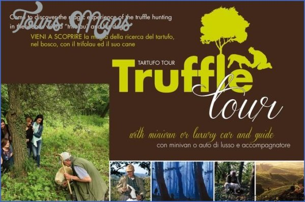truffle hunting and wine experience from florence 4 Truffle Hunting and Wine Experience from Florence