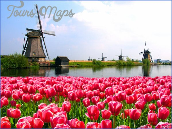 windmill and tulip day trip amsterdam 0 Windmill and Tulip Day Trip Amsterdam