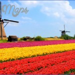 windmill and tulip day trip amsterdam 1 150x150 Windmill and Tulip Day Trip Amsterdam