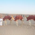 Desert Safari in Dubai Must Do Tour 1 150x150 Desert Safari in Dubai Must Do Tour!
