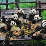 %name 15 Top Tourist Attractions China 2019