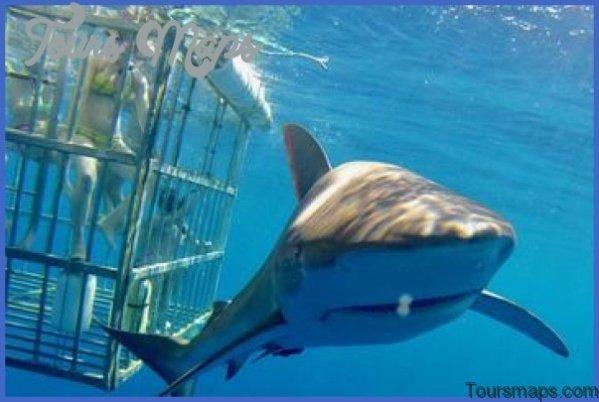 oahu shark diving 101 Oahu Shark Diving