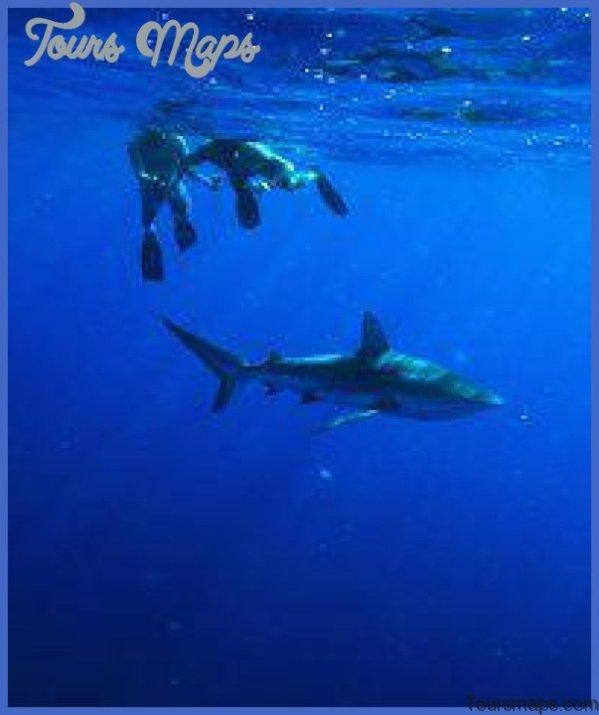 oahu shark diving 121 Oahu Shark Diving