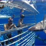 oahu shark diving 141 150x150 Oahu Shark Diving