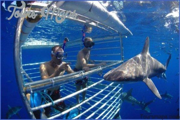 oahu shark diving 141 Oahu Shark Diving