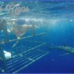 oahu shark diving 151 150x150 Oahu Shark Diving
