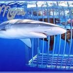 oahu shark diving 71 150x150 Oahu Shark Diving