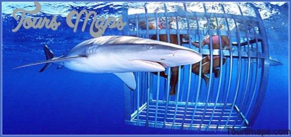 oahu shark diving 71 Oahu Shark Diving