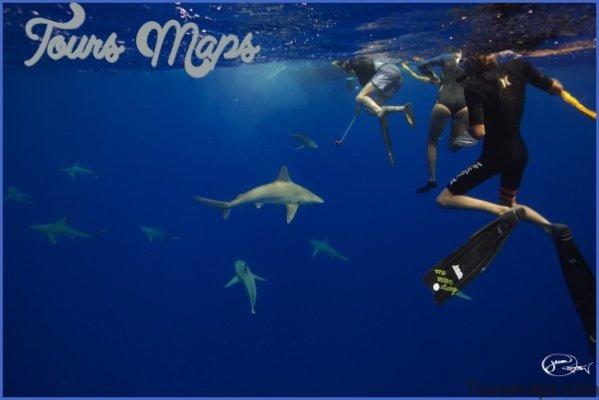 oahu shark diving 81 Oahu Shark Diving