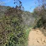 parker mesa overlook via east topanga fire road 11 150x150 Parker Mesa Overlook via East Topanga Fire Road