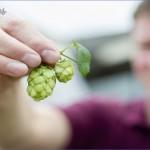 visit to kent green hop beer fortnight the hop garden of england  2 150x150 Visit To Kent Green Hop Beer Fortnight The Hop Garden Of England