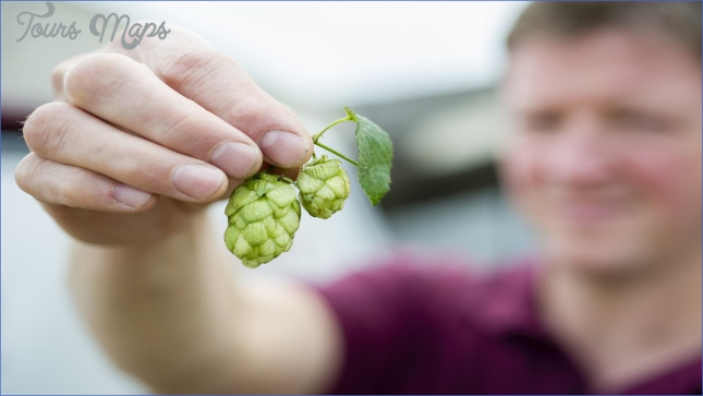 visit to kent green hop beer fortnight the hop garden of england  2 Visit To Kent Green Hop Beer Fortnight The Hop Garden Of England