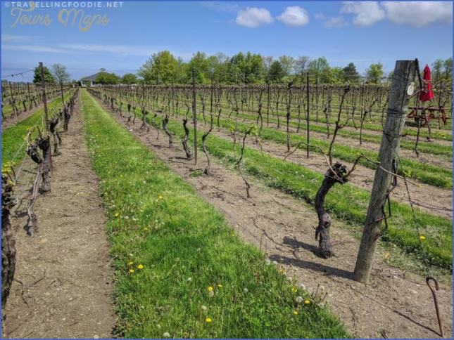 visit to wine country because you need great beer to make great wine 2 Visit To Wine Country Because You Need Great Beer To Make Great Wine