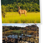 Ithala Game Reserve KwaZulu Natal 150x150 Ithala Game Reserve, KwaZulu Natal