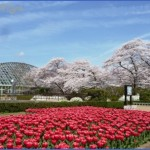 gardens of kyoto 5 150x150 Gardens Of Kyoto