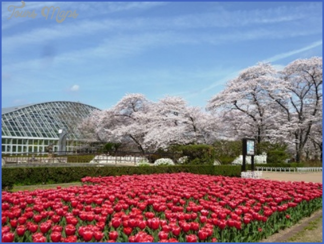 gardens of kyoto 5 Gardens Of Kyoto