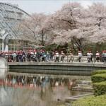 gardens of kyoto 8 150x150 Gardens Of Kyoto