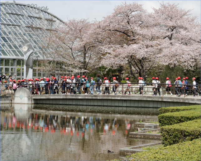 gardens of kyoto 8 Gardens Of Kyoto