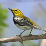 harney county migratory bird festival usa festivals 3 150x150 Harney County Migratory Bird Festival   USA Festivals