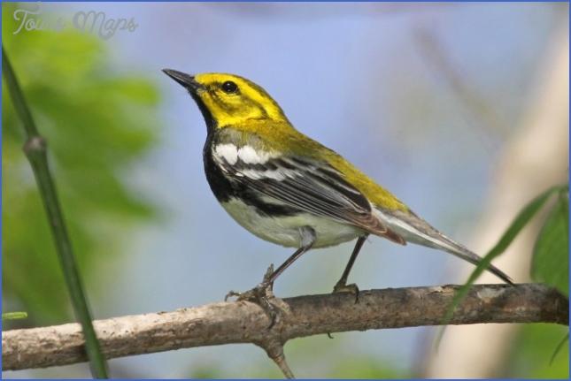 harney county migratory bird festival usa festivals 3 Harney County Migratory Bird Festival   USA Festivals