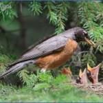 harney county migratory bird festival usa festivals 5 150x150 Harney County Migratory Bird Festival   USA Festivals