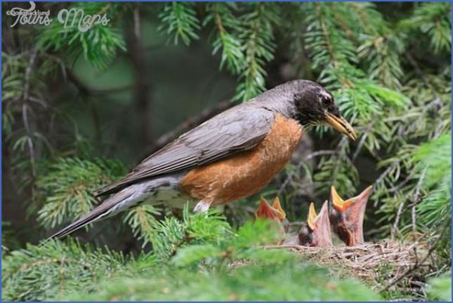 harney county migratory bird festival usa festivals 5 Harney County Migratory Bird Festival   USA Festivals