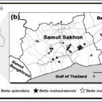 where is samut songkhram thailand samut songkhram thailand map samut songkhram thailand map download free 0 150x150 Where is Samut Songkhram, Thailand?   Samut Songkhram, Thailand Map   Samut Songkhram, Thailand Map Download Free