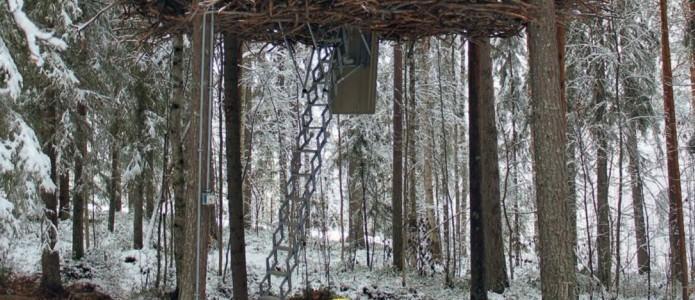 the birds nest treehotel sweden